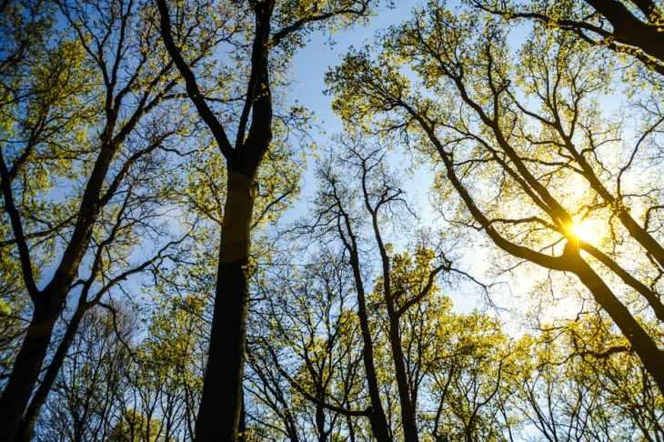 mindfulness in nature at yellow umbrella wellness center