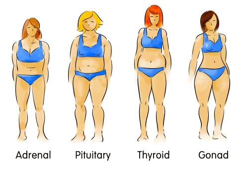 body-types (2) (3)